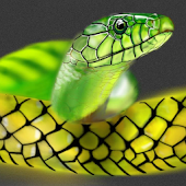 Snake Wallpapers