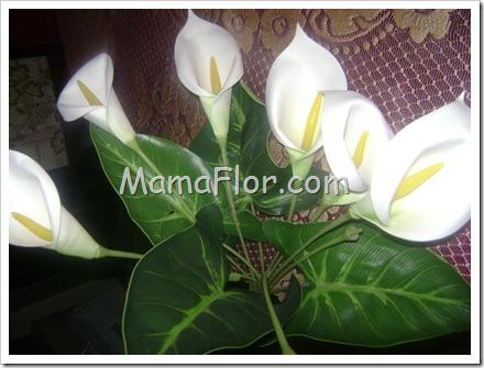 mamaflor-5669