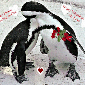 Two Hearts Love by Cheryl Beaudoin - Typography Captioned Photos ( valentine's day, love, hearts, roses, penguins, postcard, valentine, , improving mood, moods, red, the mood factory, inspirational, passion, passionate, enthusiasm )