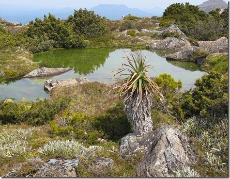 Pond and Pandani