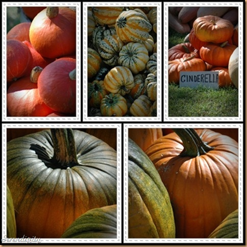photoscape pumpkin