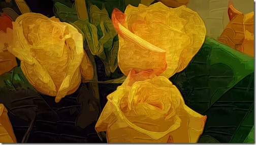Yellow rose again