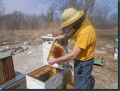 Overwintered hive 2011