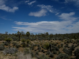 no more saguaros, now Joshua trees and smell the sage!