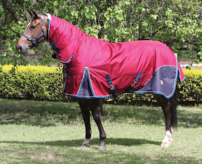 Horse Synthetic Winter Range Of Rugs