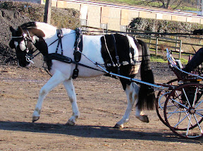 Arden Dexter Pro Wipe Clean BioThane Single Horse Harness Fixed Backband