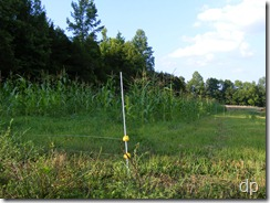 electric fence around the corn field