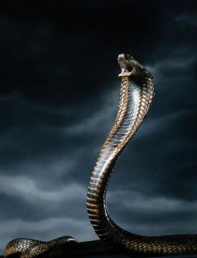 Teistiskā evolūcija - velna nāvējošais ierocis