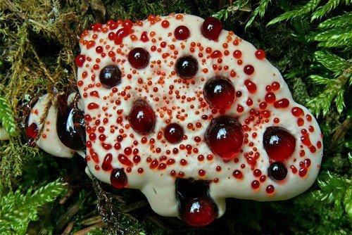 Самые жуткие растения планеты Земля