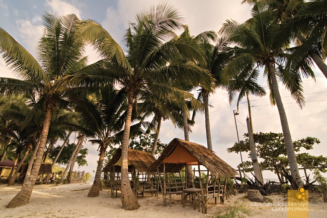 Coconuts and Cogon Huts at Matabang Beach Resort
