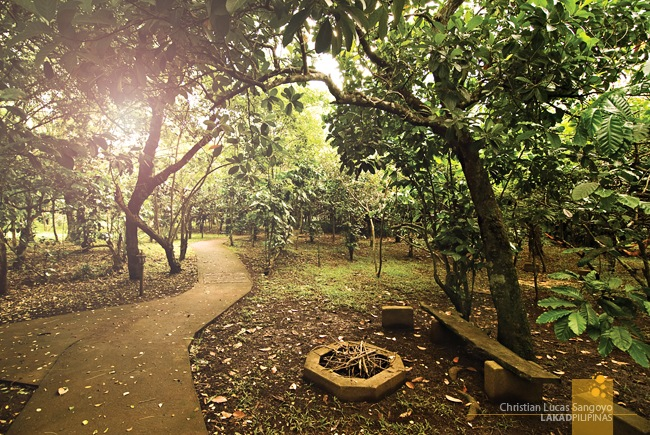 Pathways and Coffee Trees at the Coffee Farmhouse