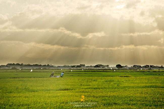 Godrays at the Candaba Rice Field