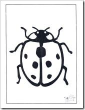 insectos (4)