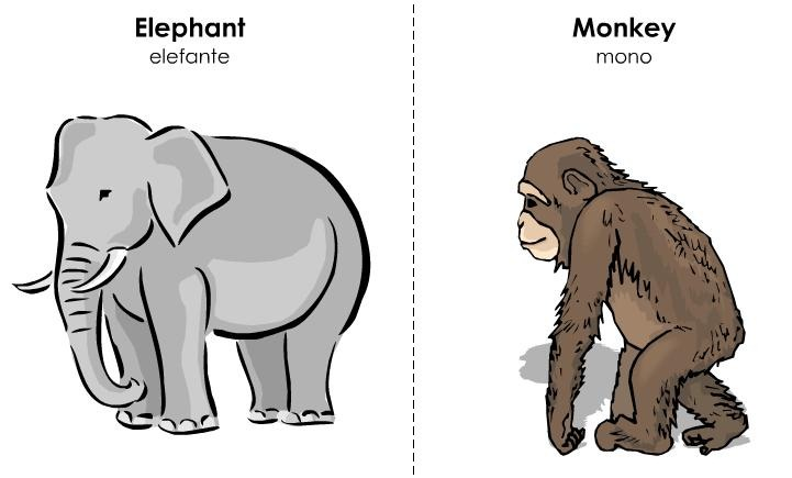 tarjetas ilustradas vocabulario inglés (35)