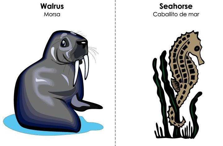 tarjetas ilustradas vocabulario inglés (29)