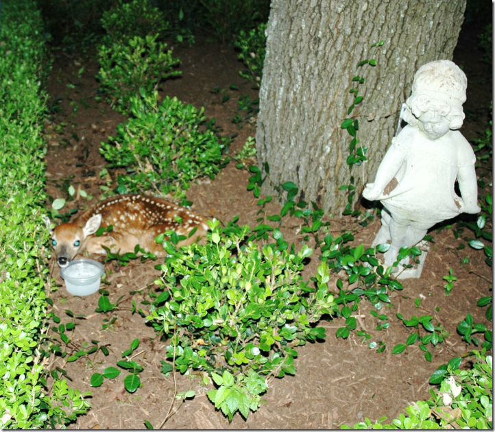 Or You Might Find This A Little Fawn Sleeping In Your Back Yard So Beautiful I Hate That Story Of Lauren Ross Austin Is Over Ill Leave