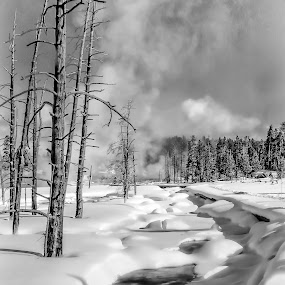 Fire & Ice by John Finch - Black & White Landscapes ( nature, black and white, snow, yellowstone national park, landscape, , b&w )