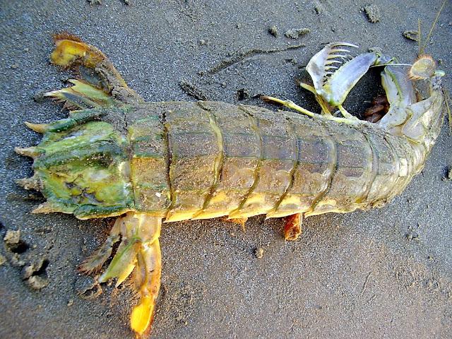wild macro: The Mysterious Sea creature