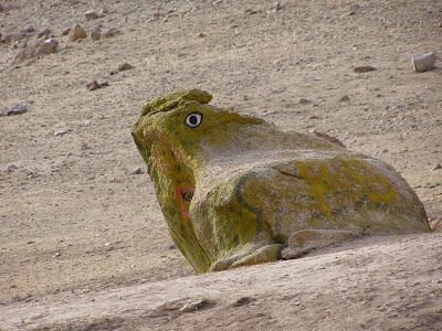 Khardung La frog