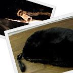 Black Beaver Muff
