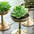 succulents fancy.jpg