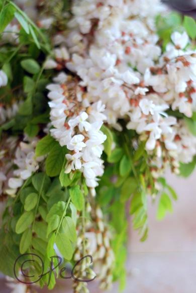 fiori di robinia