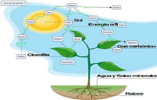 Respiracion De Las Plantas Gif: Dibujos Para Explicar Las Partes De Una Planta