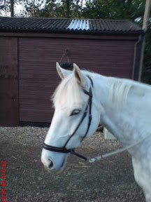 QHP DonnDy/'on Double Noseband Bridle