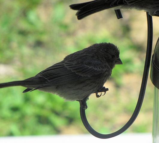 [sparrow[3].jpg]