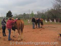 preparing to mount the horse