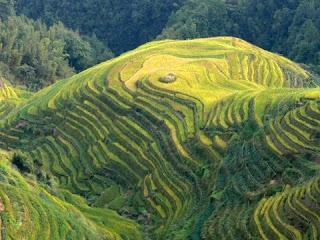 riziere en terrasses de Longji