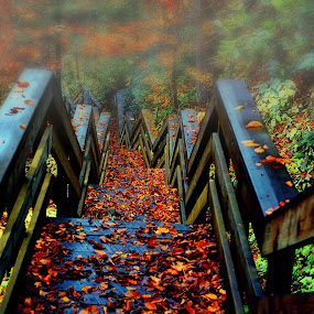 Going Down by James Gramm - Buildings & Architecture Public & Historical ( stairs, park, color, fall, leaves, mist )