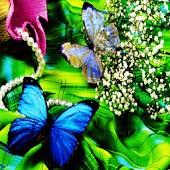 3D Butterfly 12