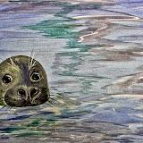 zeehondje 2
