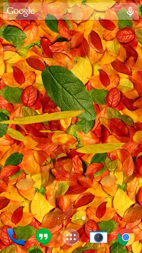 가을 나뭇잎 3D라이브 배경 화면