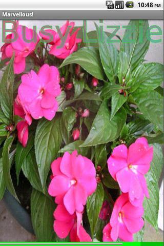 Garden Flowers- screenshot