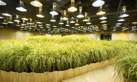 Pruned The Subterranean Farms Of Tokyo