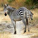 Zambia Safari Victoria Falls logo