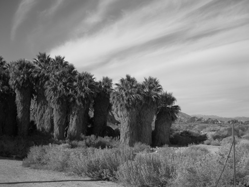 Thousand Palms Oasis Coachella Valley Preserve