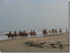 5315 Horses on Beach South Padre Island Texas