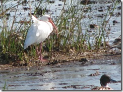 5680 White Ibis South Padre Island Texas