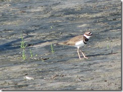 5636 Killdeer South Padre Island Texas