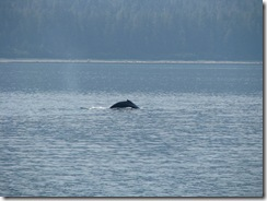 4547 Whale Watching Juneau AK
