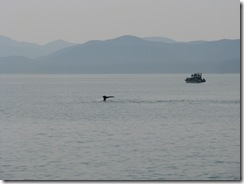 4482 Whale Watching Juneau AK