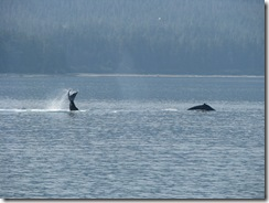 4544 Whale Watching Juneau AK