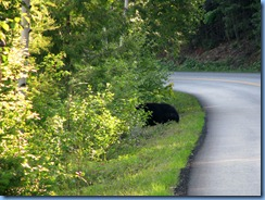 9438 Black Bear Going To The Sun Road GNP MT