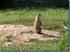 5959 Prairie Dog Days Inn Cortez CO