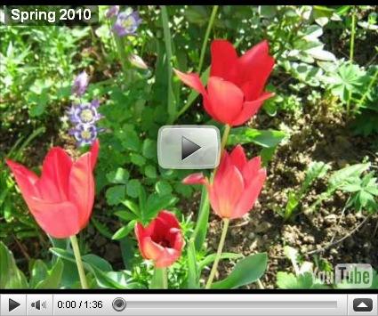 , Flori,primăvara 2010, startachim blog, startachim blog