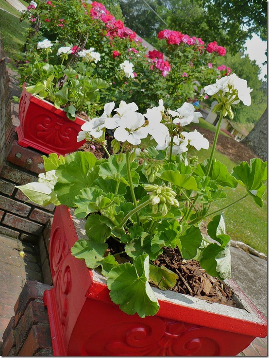 Redplanters