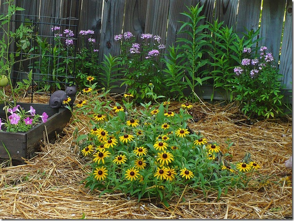 flowers in a vegetable garden